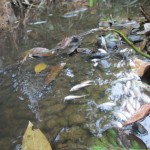 Illegal Fishing Cemari Pedalaman Sungai Barito